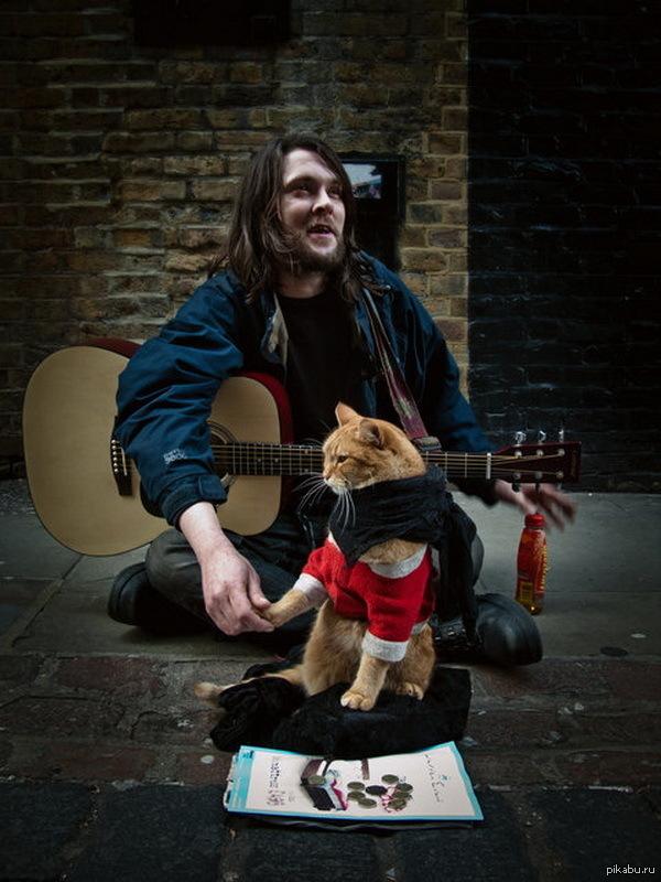 Уличный кот по имени боб только что