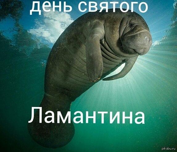 http://s2.pikabu.ru/post_img2/2014/02/09/7/1391940674_925489094.jpg